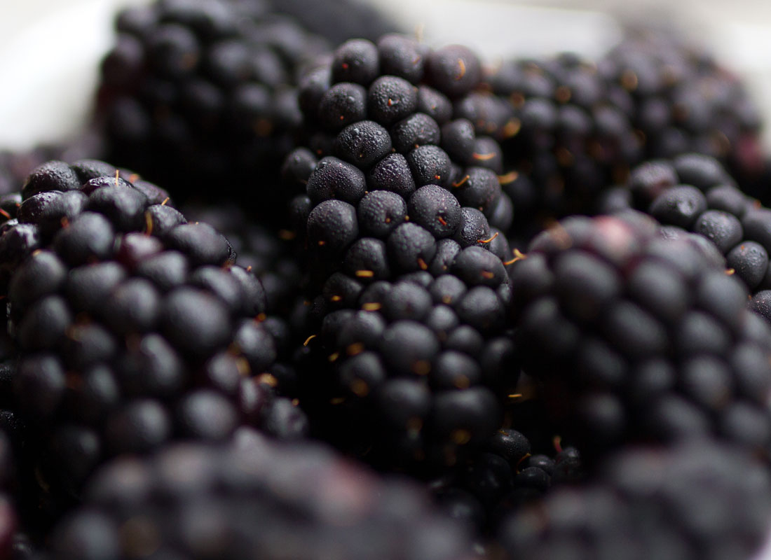 Zone-7-blackberries-1